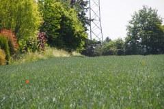 p-200527-120323-tb-boklimastadtgruen-r2120228.jpg